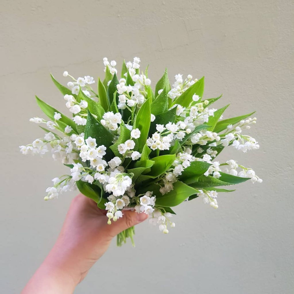 Lily Of The Valley Meaning Discover The Symbols And The History