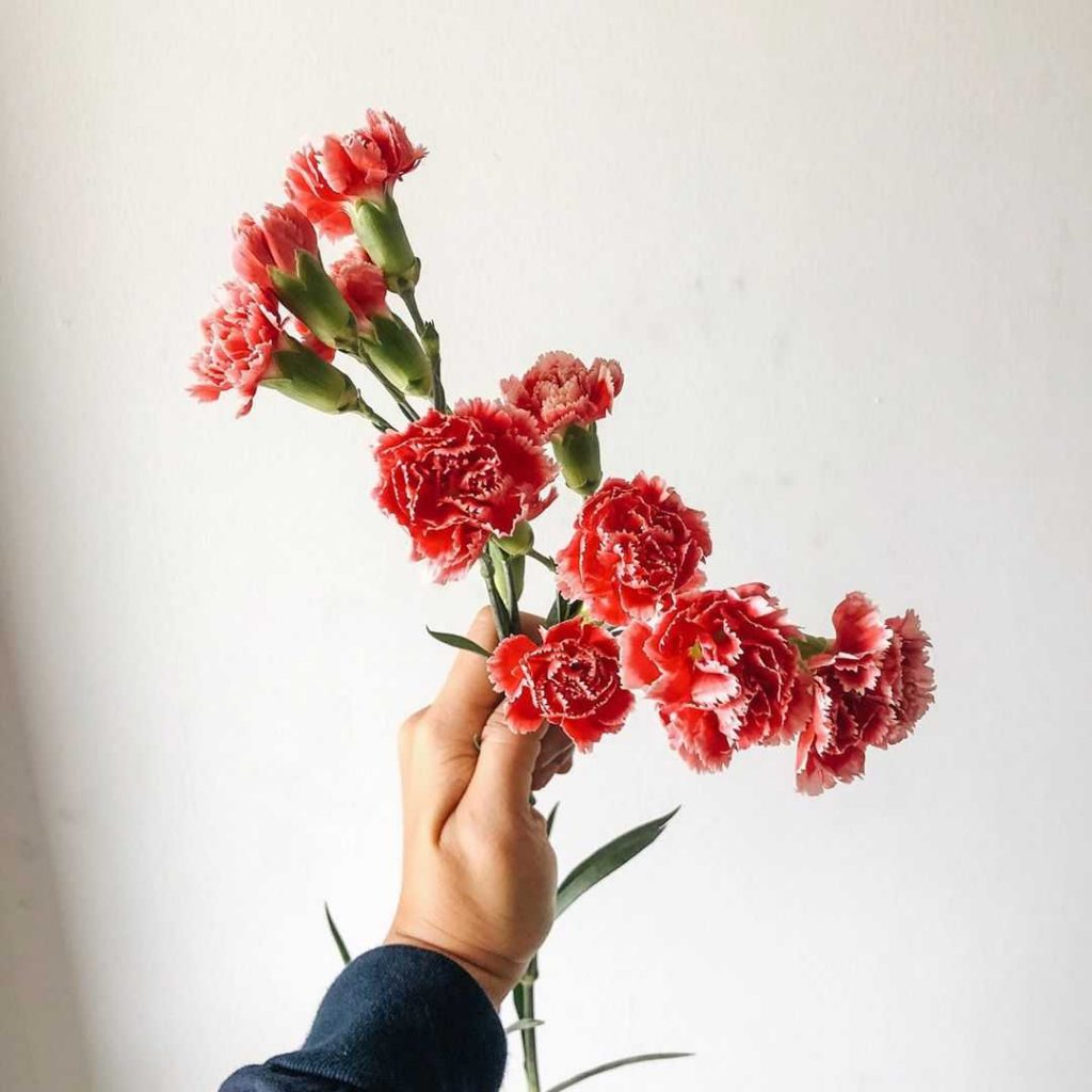 Red carnation meaning