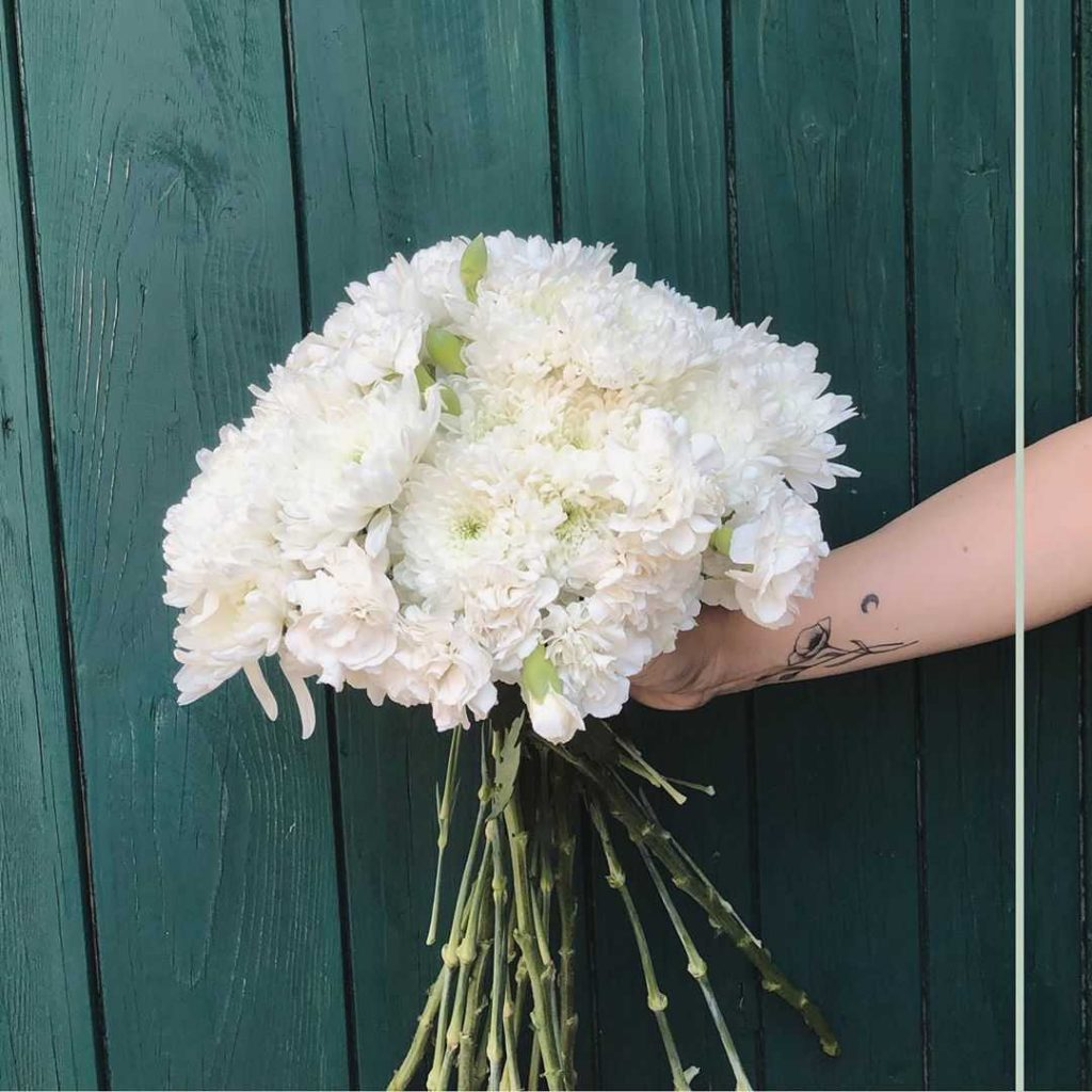 White carnation meaning