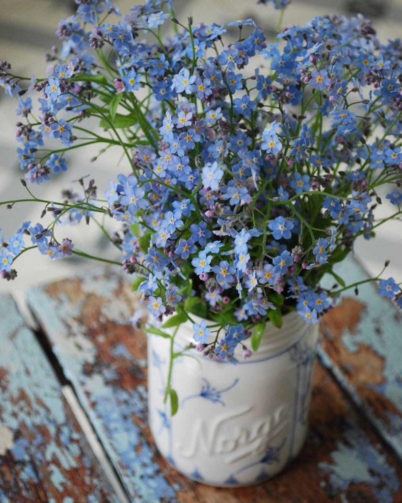Myosotis bouquet in a vase