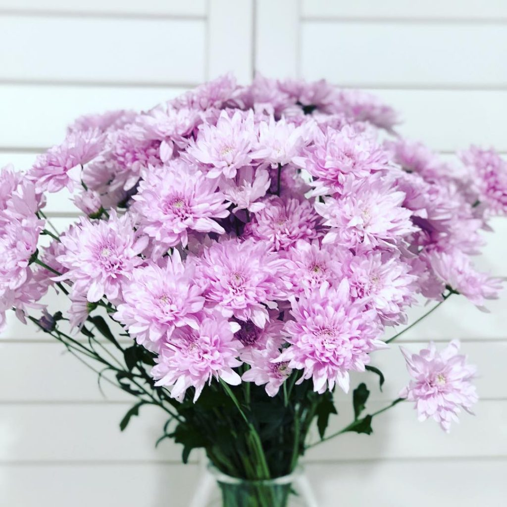 Gorgeous chrysanthemums in vase