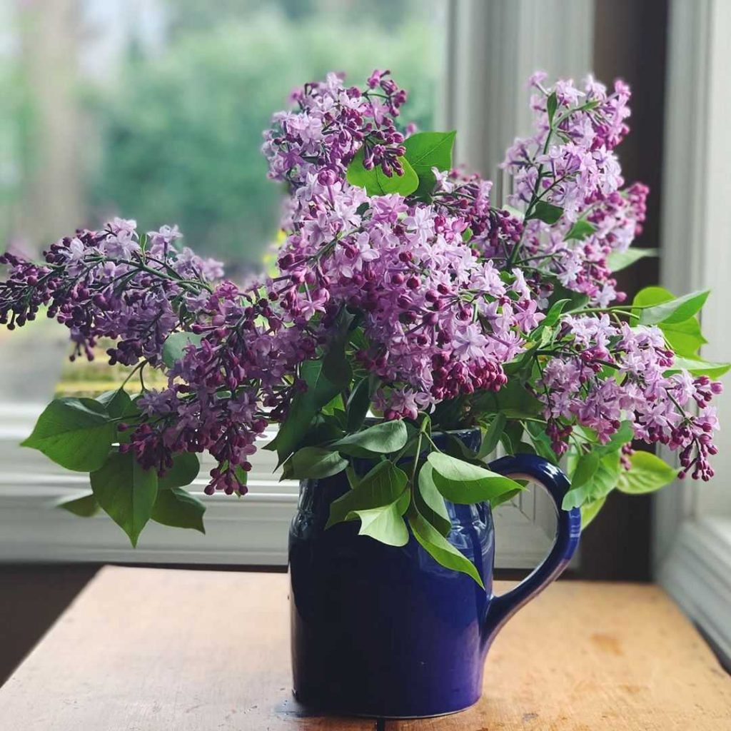 Lilac flower meaning